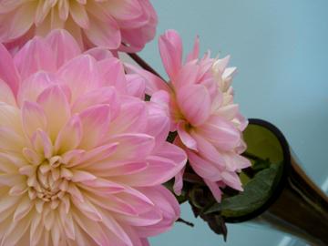 Flowers_turq